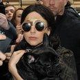 Lady Gaga Gold Leaf Forehead and Dog